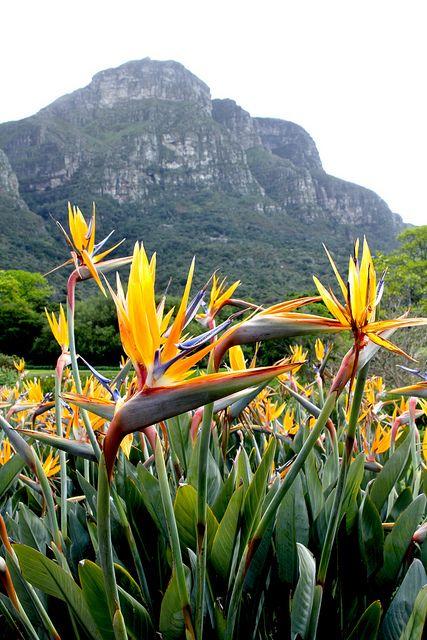 indigenous-gardens